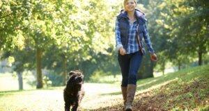 Hund macht gesund: Warum Hunde Frauchen und Herrchen so gut tun!