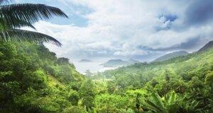 Dschungelcamp 2016 – Ihr Urlaub im Dschungel