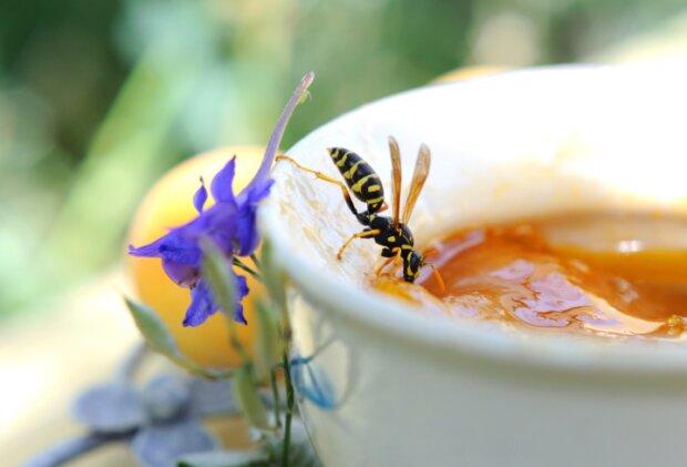 Ein Summen und Stechen: Was gegen Insektenstiche wirklich hilft