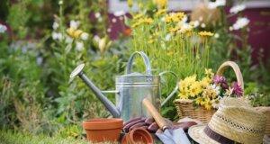 Pflanzen im Garten selber säen