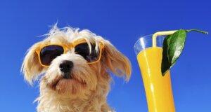 Hund mit Sonnenbrille und Cocktail