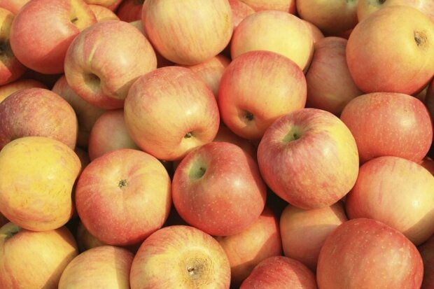 Selbst gepresster Apfelsaft – gesunde Köstlichkeit aus dem eigenen Garten