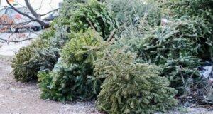 So nutzen Sie den Weihnachtsbaum auch noch nach Weihnachten