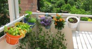 So machen Sie Ihre Pflanzen fit für den Urlaub