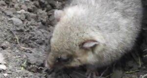 Tierwelt: Ab Oktober fallen viele Tiere in den Winterschlaf
