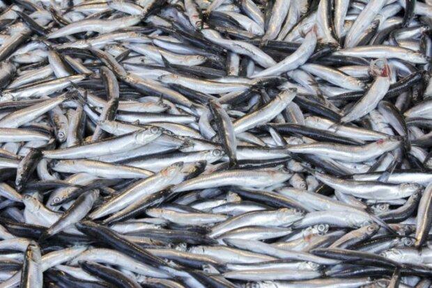 Alarm in den Meeren – Überfischung schreitet voran