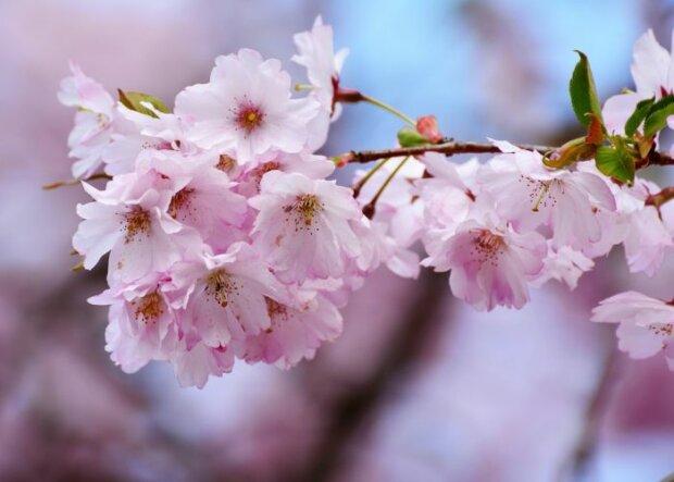 Frühlingserwachen: Aktivitäten für die schönste Jahreszeit