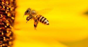 """Bayerisches Volksbegehren """"Rettet die Bienen"""": Große Resonanz im Volk"""