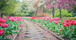 Frühlingsfrische für den Garten